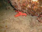 PADI Night Diver Course